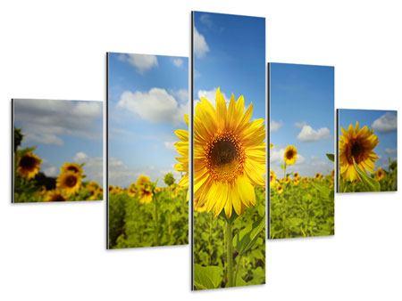Aluminiumbild 5-teilig Sommer-Sonnenblumen