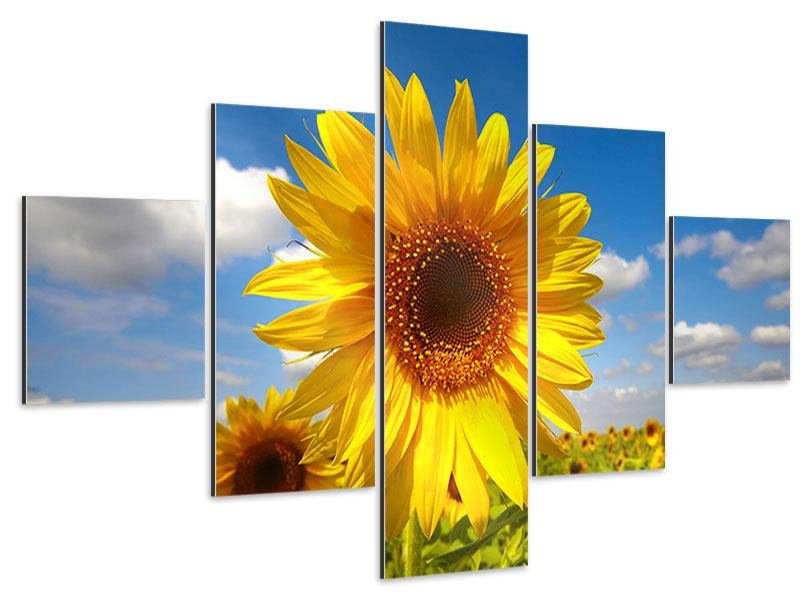 Aluminiumbild 5-teilig Das Feld der Sonnenblumen