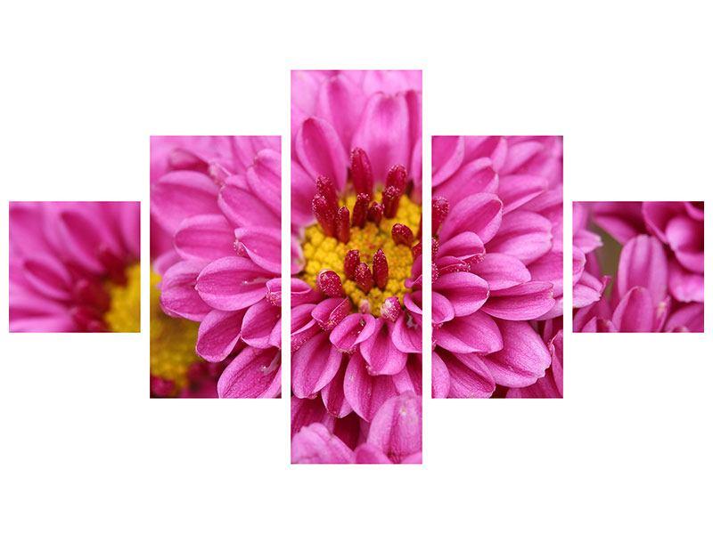 Aluminiumbild 5-teilig Chrysanthemen
