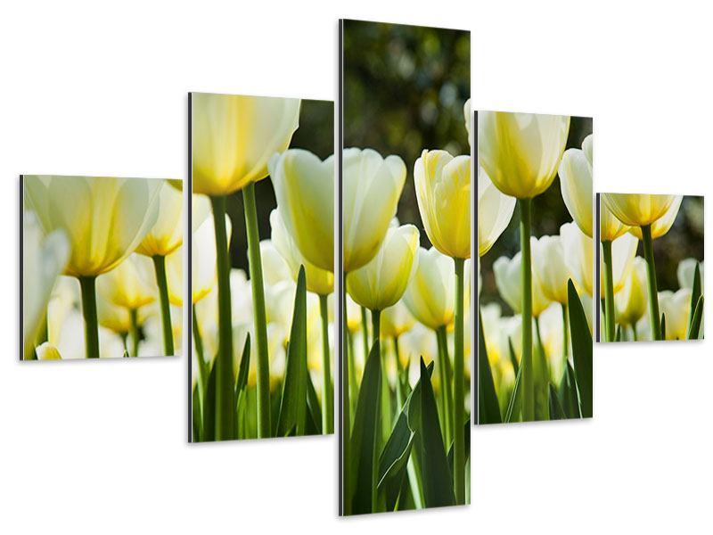 Aluminiumbild 5-teilig Tulpen bei Sonnenuntergang