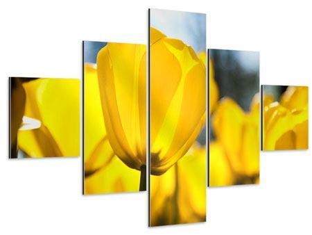 Aluminiumbild 5-teilig Gelbe Tulpen in XXL