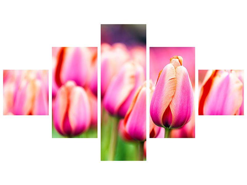 Aluminiumbild 5-teilig Pretty in Pink