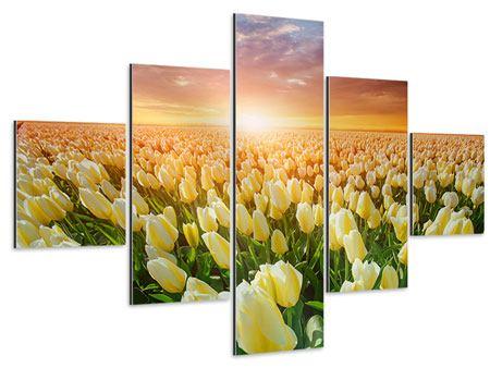 Aluminiumbild 5-teilig Sonnenaufgang bei den Tulpen