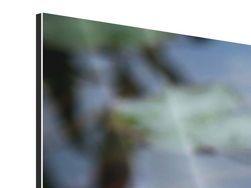 Aluminiumbild 5-teilig Das Seerosenduo