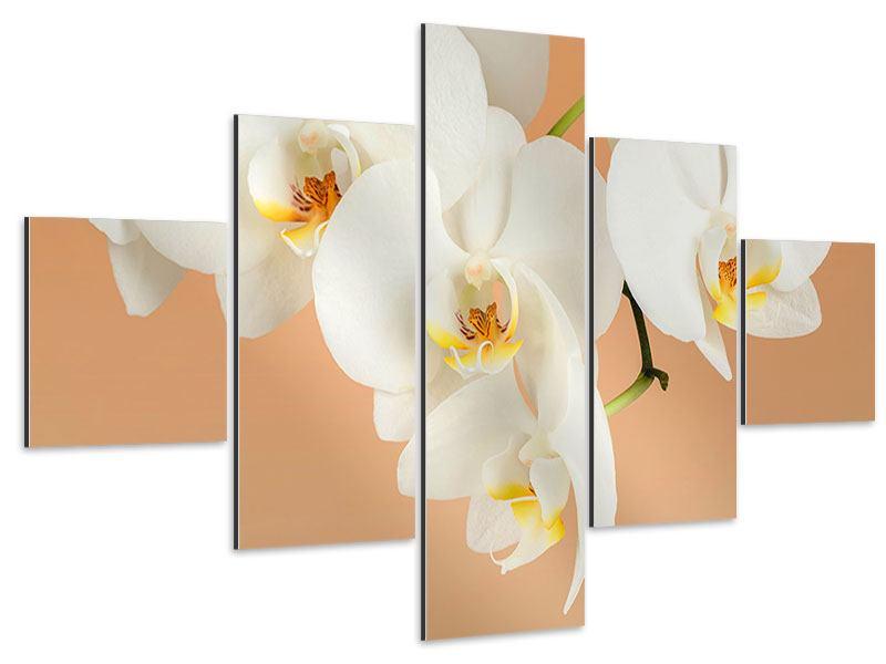 Aluminiumbild 5-teilig Weisse Orchideenblüten