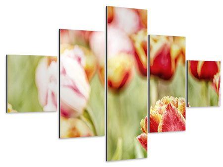 Aluminiumbild 5-teilig Die Schönheit der Tulpe