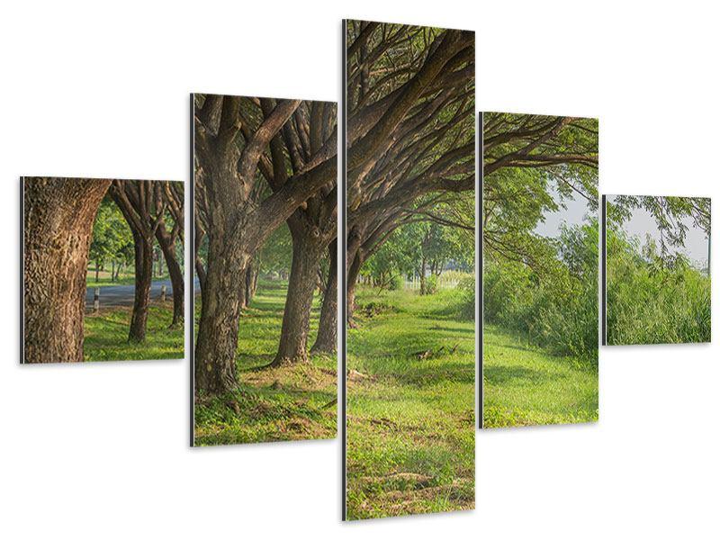 Aluminiumbild 5-teilig Alter Baumbestand
