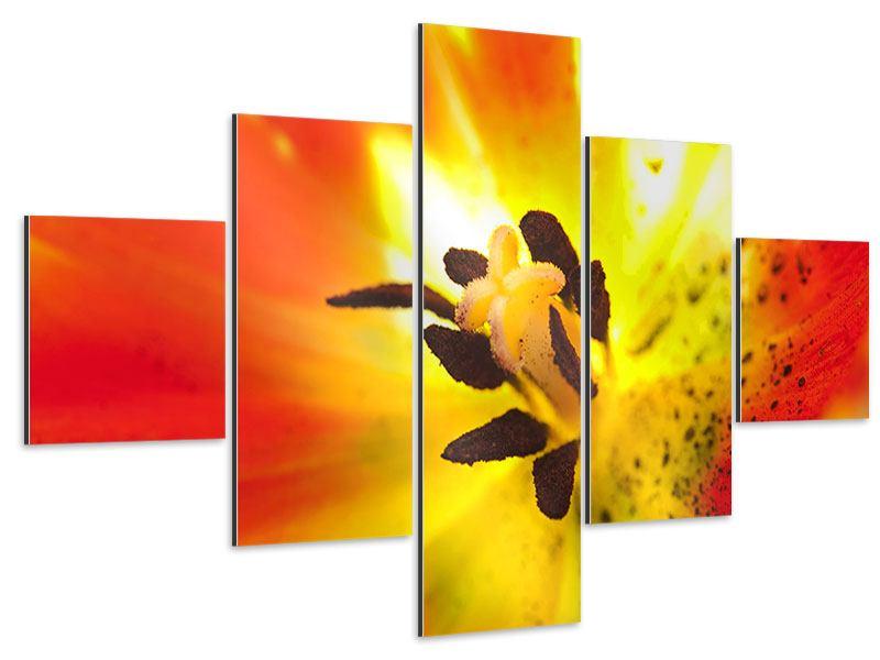 Aluminiumbild 5-teilig Die Narbe einer Tulpe XXL