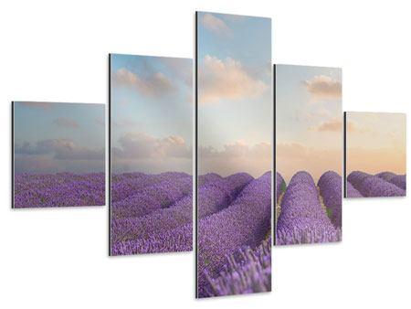 Aluminiumbild 5-teilig Das blühende Lavendelfeld