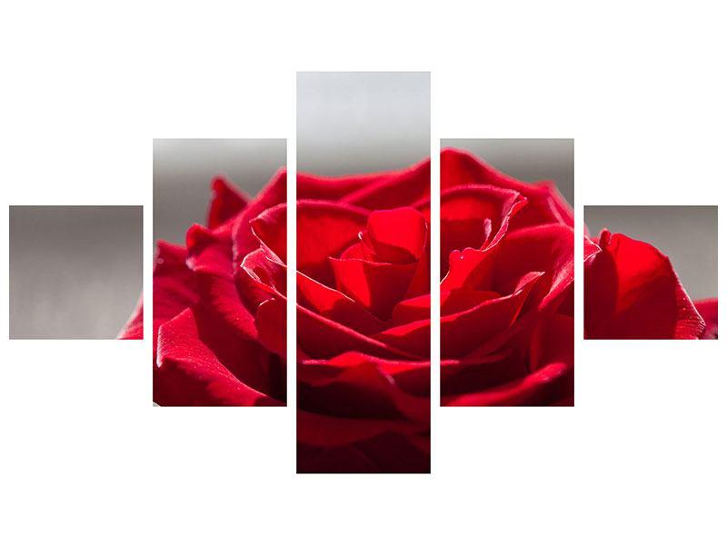 Aluminiumbild 5-teilig Rote Rosenblüte