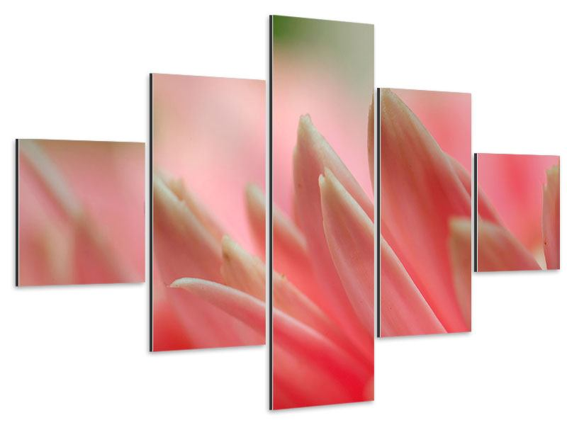 Aluminiumbild 5-teilig Close Up einer Blüte