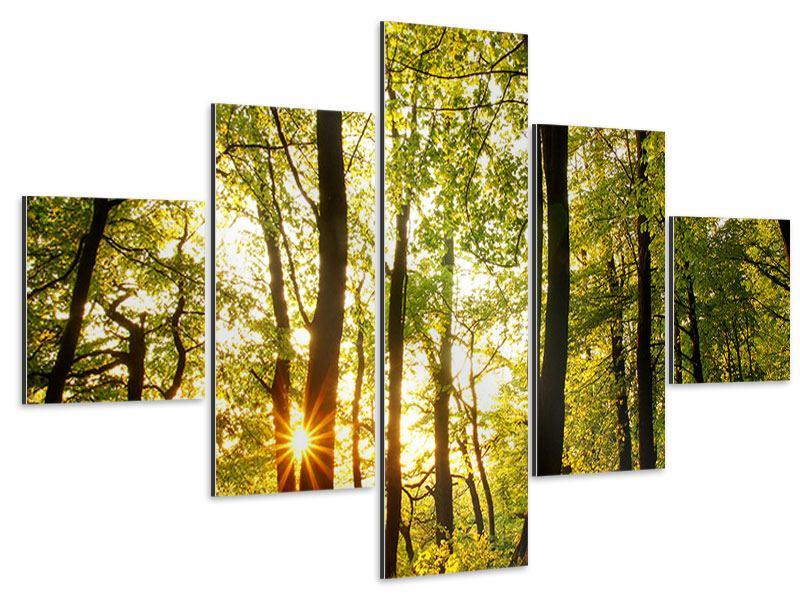 Aluminiumbild 5-teilig Sonnenuntergang zwischen den Bäumen