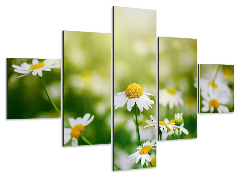 Aluminiumbild 5-teilig Die Gänseblümchen
