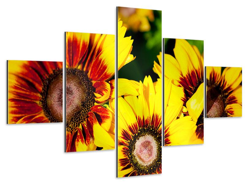 Aluminiumbild 5-teilig Reife Sonnenblumen