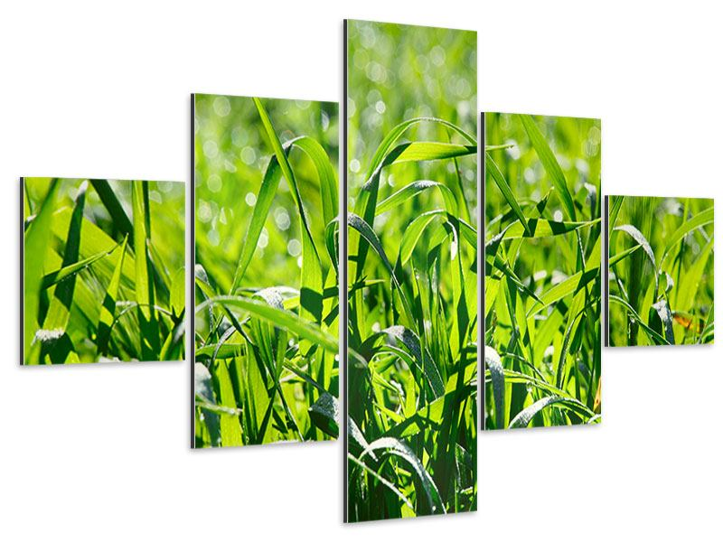 Aluminiumbild 5-teilig Sonniges Gras