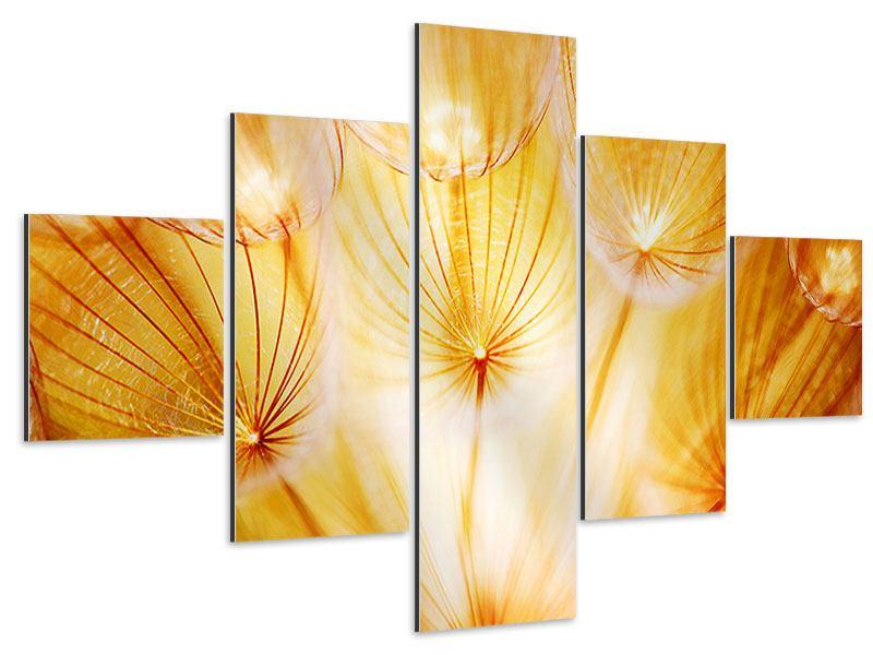 Aluminiumbild 5-teilig Close Up Pusteblume im Licht