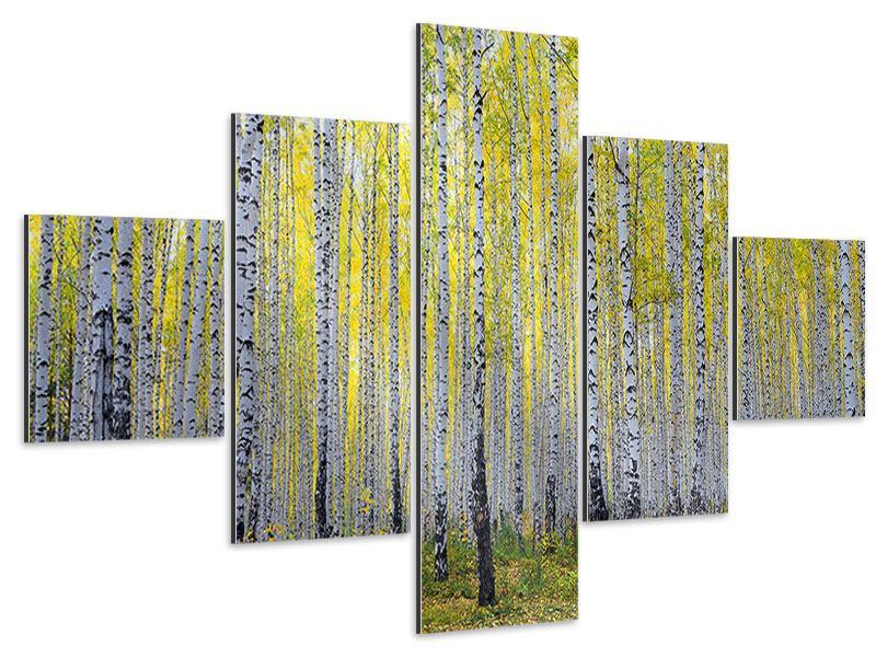 Aluminiumbild 5-teilig Herbstlicher Birkenwald