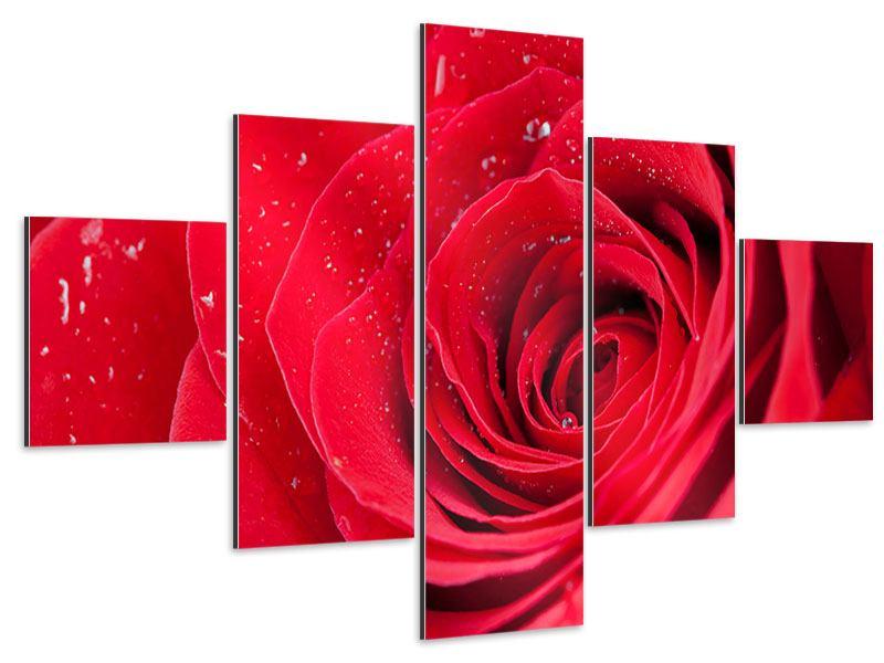 Aluminiumbild 5-teilig Rote Rose im Morgentau