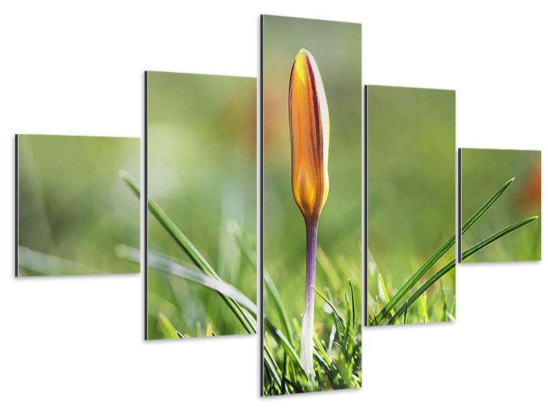Aluminiumbild 5-teilig Die Blütenknospe