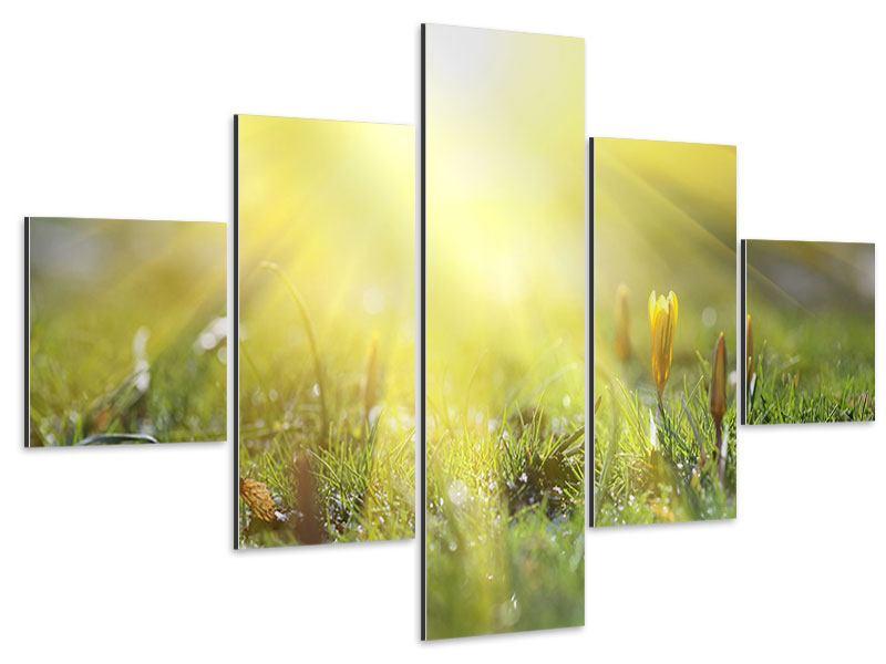 Aluminiumbild 5-teilig Blumige Wiese