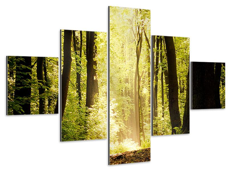 Aluminiumbild 5-teilig Sonnenaufgang im Wald