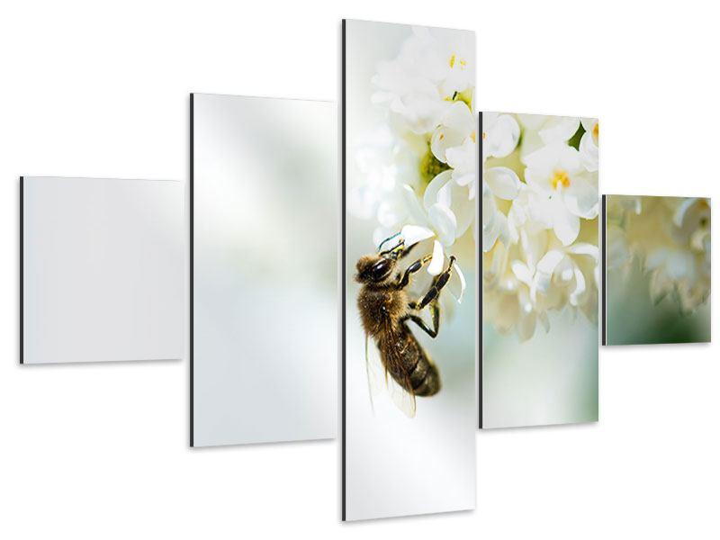 Aluminiumbild 5-teilig Die Hummel und die Blüte