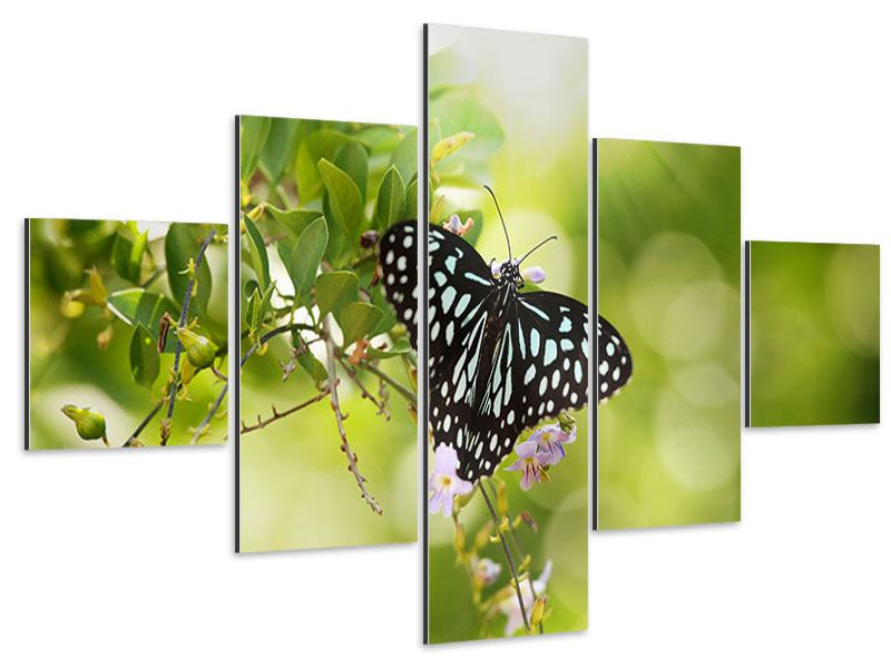 Aluminiumbild 5-teilig Papilio Schmetterling XXL