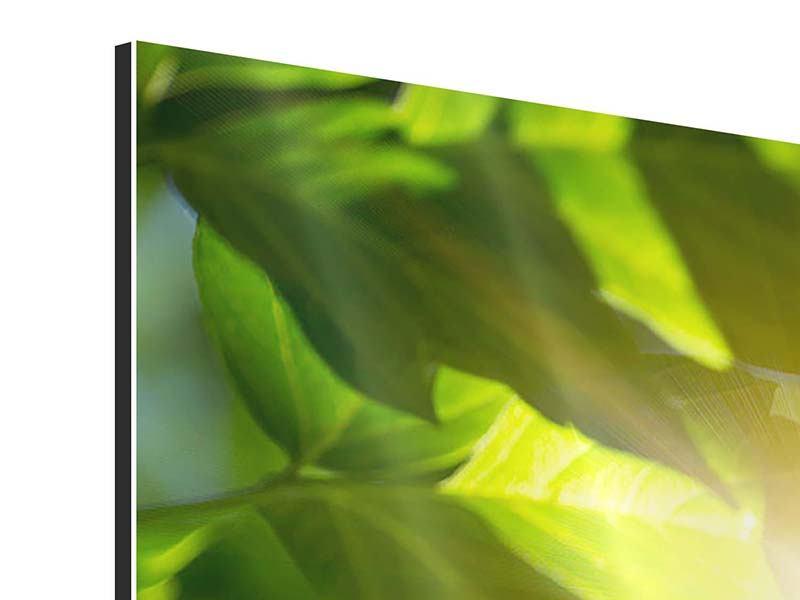 Aluminiumbild 5-teilig Es grünt so grün