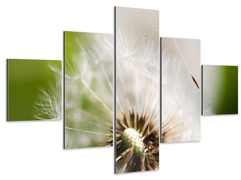 Aluminiumbild 5-teilig Pusteblume Löwenzahn