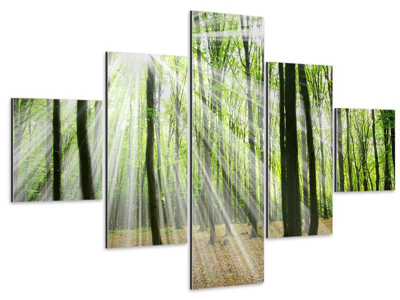 Aluminiumbild 5-teilig Magisches Licht in den Bäumen