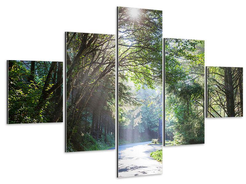 Aluminiumbild 5-teilig Sonniger Waldweg