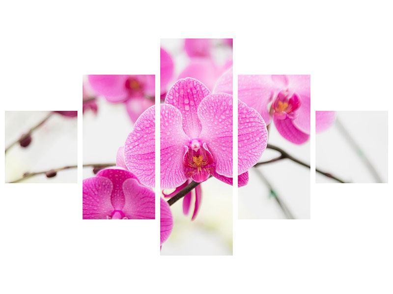 Aluminiumbild 5-teilig Das Symbol der Orchidee