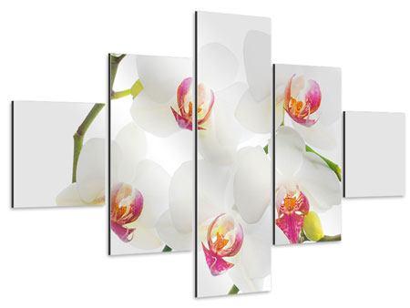 Aluminiumbild 5-teilig Orchideenliebe