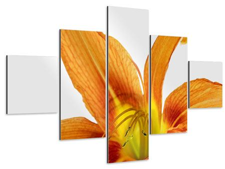 Aluminiumbild 5-teilig Die Tiger-Lilie