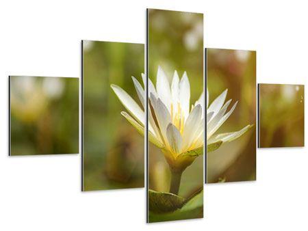 Aluminiumbild 5-teilig Lilien-Lichtspiel