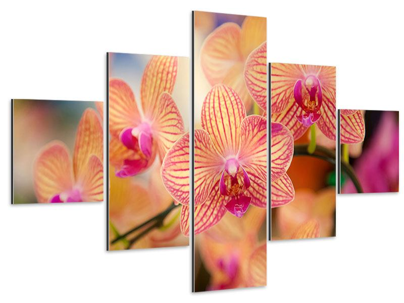 Aluminiumbild 5-teilig Exotische Orchideen