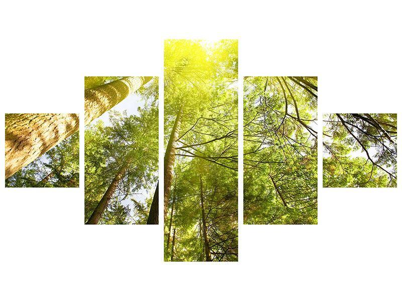 Aluminiumbild 5-teilig Baumkronen in der Sonne