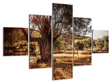 Aluminiumbild 5-teilig Olivenhain