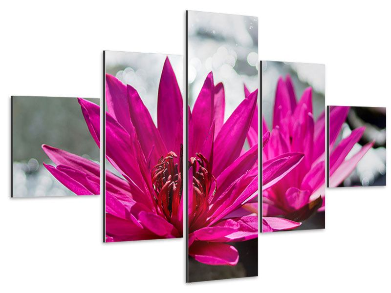 Aluminiumbild 5-teilig Seerosenduo in Pink