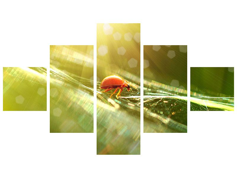 Aluminiumbild 5-teilig Marienkäfer im Sonnenlicht