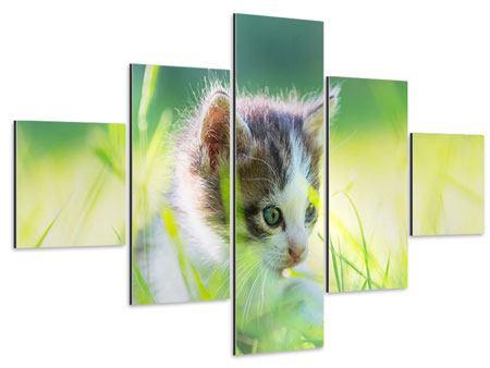 Aluminiumbild 5-teilig Kitten