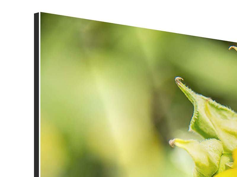 Aluminiumbild 5-teilig Wilde Sonnenblume