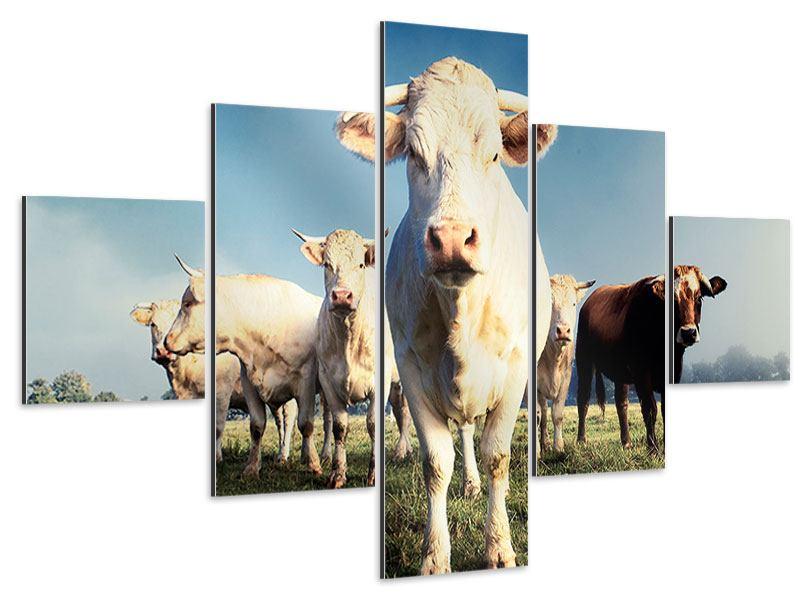 Aluminiumbild 5-teilig Kühe