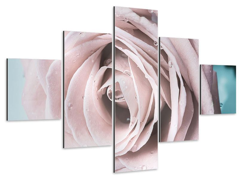 Aluminiumbild 5-teilig Pastellrose