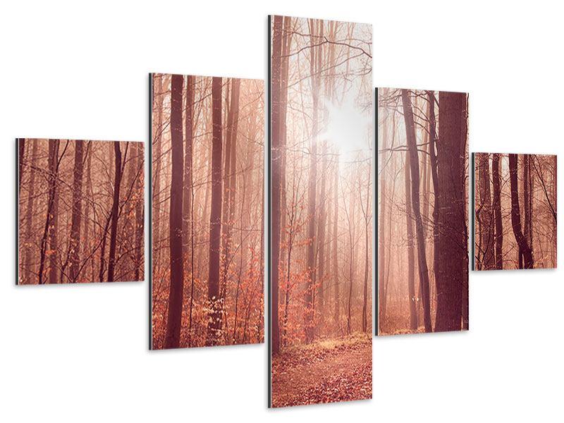 Aluminiumbild 5-teilig Sonnenuntergang im Herbstwald