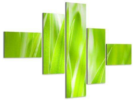 Aluminiumbild 5-teilig modern Gras XXL
