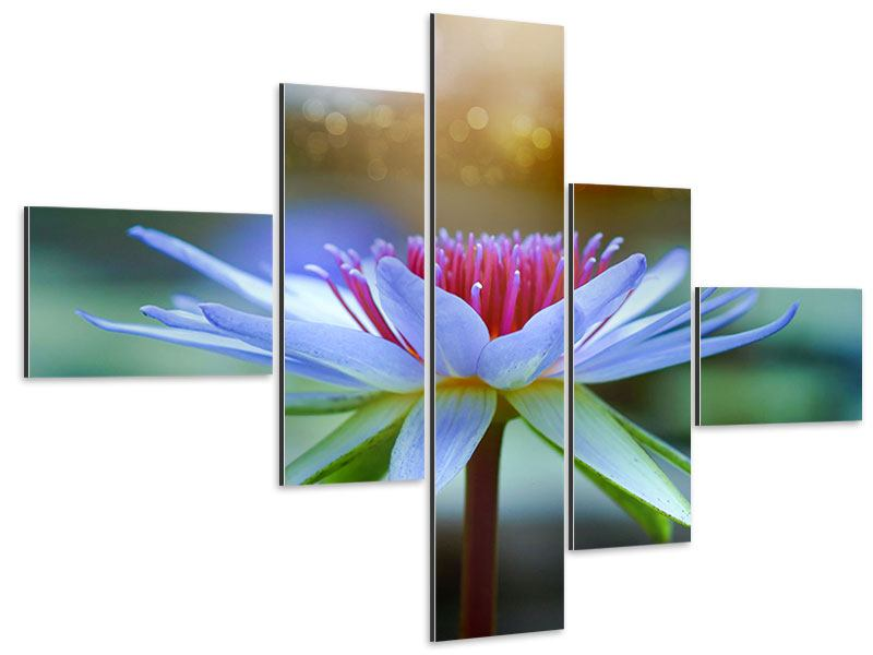 Aluminiumbild 5-teilig modern Pretty Lotus