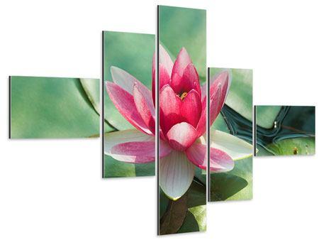 Aluminiumbild 5-teilig modern Der Frosch und das Lotusblatt