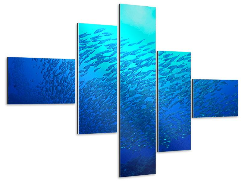 Aluminiumbild 5-teilig modern Fischwelt