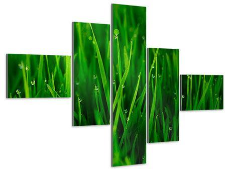 Aluminiumbild 5-teilig modern Gras mit Morgentau